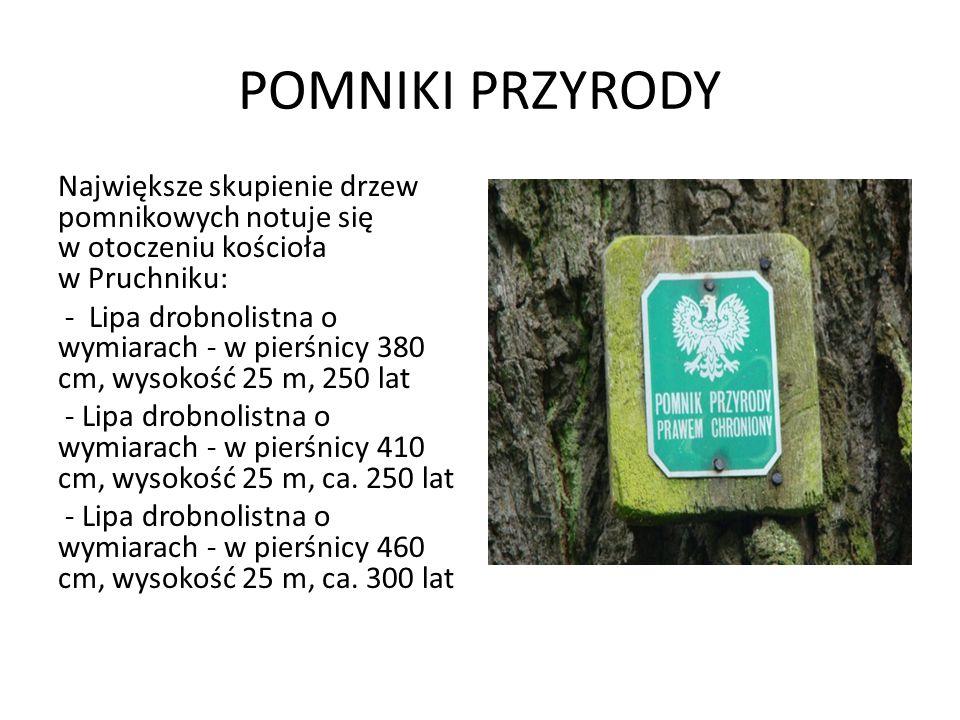 POMNIKI PRZYRODY Największe skupienie drzew pomnikowych notuje się w otoczeniu kościoła w Pruchniku: - Lipa drobnolistna o wymiarach - w pierśnicy 380