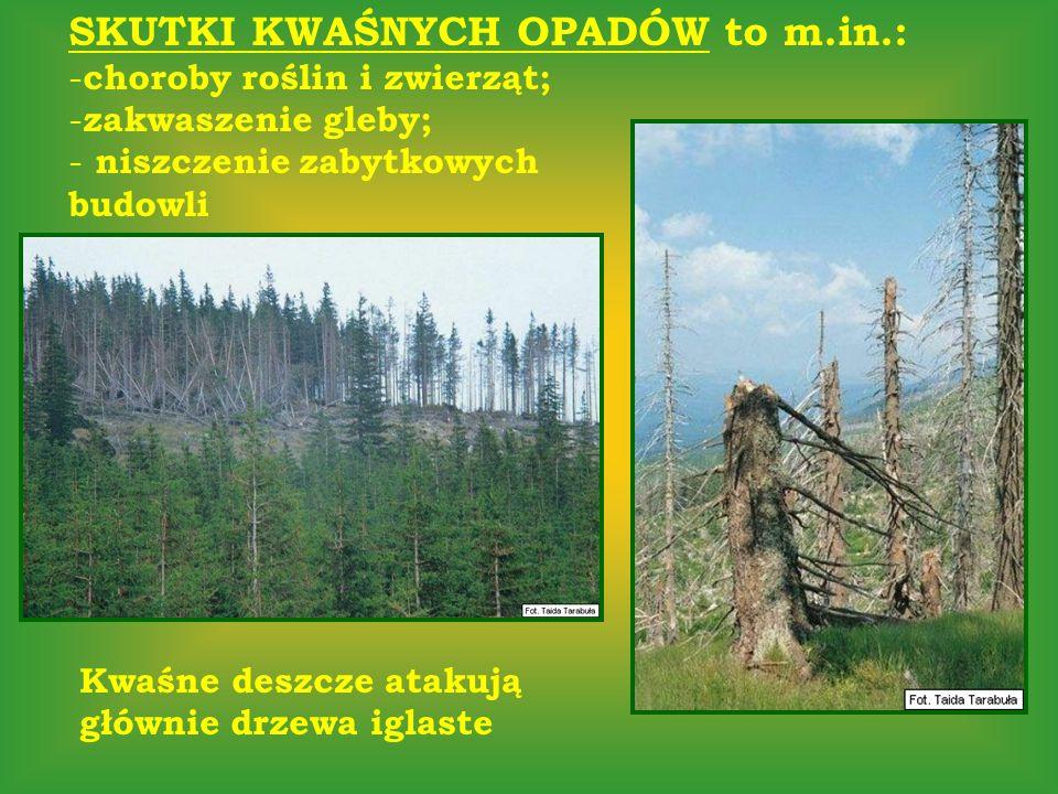 SKUTKI KWAŚNYCH OPADÓW to m.in.: - choroby roślin i zwierząt; - zakwaszenie gleby; - niszczenie zabytkowych budowli Kwaśne deszcze atakują głównie drz