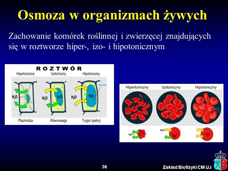 36 Zakład Biofizyki CM UJ Zachowanie komórek roślinnej i zwierzęcej znajdujących się w roztworze hiper-, izo- i hipotonicznym Osmoza w organizmach żyw