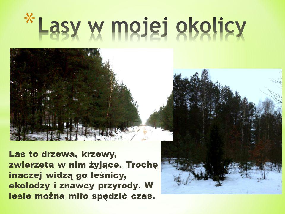 * Przez nasze lasy przebiegają tory klejowe, którymi kiedyś jeździły pociągi na trasie Ostrołęka-Olsztyn.