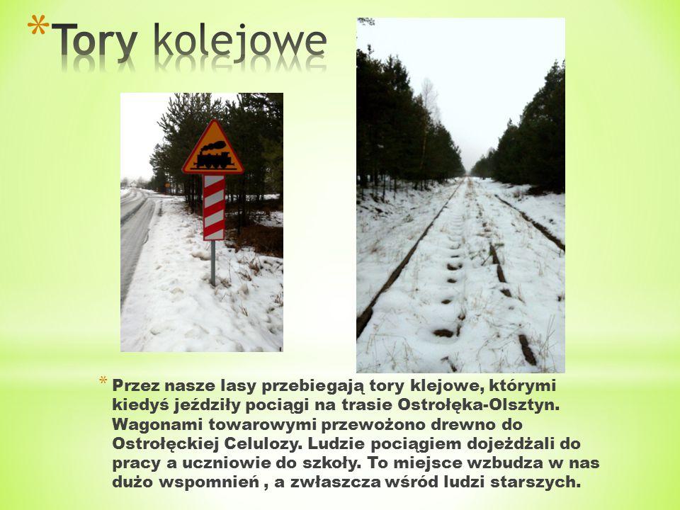 * Przez nasze lasy przebiegają tory klejowe, którymi kiedyś jeździły pociągi na trasie Ostrołęka-Olsztyn. Wagonami towarowymi przewożono drewno do Ost