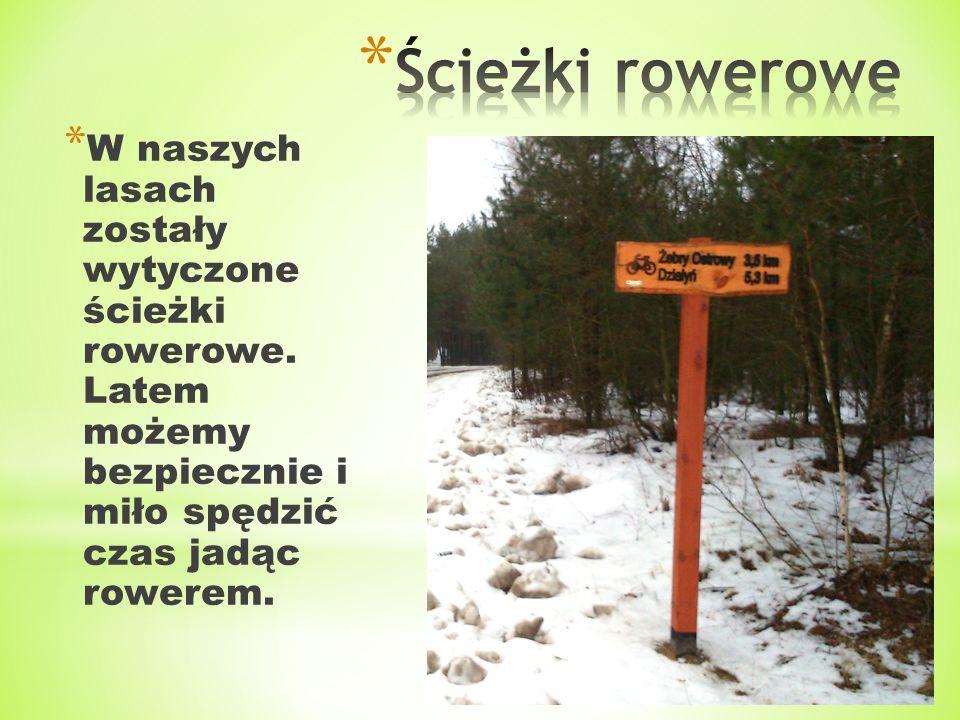 * W naszych lasach zostały wytyczone ścieżki rowerowe. Latem możemy bezpiecznie i miło spędzić czas jadąc rowerem.