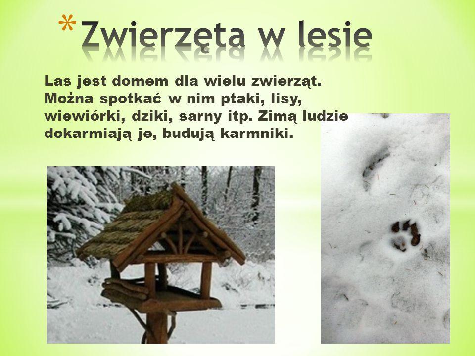 Las jest domem dla wielu zwierząt. Można spotkać w nim ptaki, lisy, wiewiórki, dziki, sarny itp. Zimą ludzie dokarmiają je, budują karmniki.