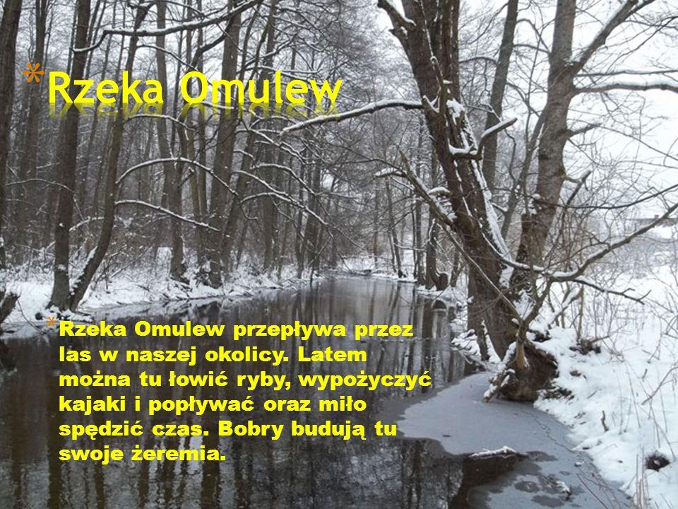 * Rzeka Omulew przepływa przez las w naszej okolicy. Latem można tu łowić ryby, wypożyczyć kajaki i popływać oraz miło spędzić czas. Bobry budują tu s