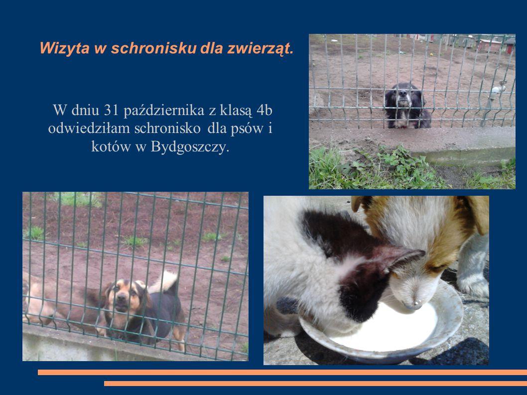 Wizyta w schronisku dla zwierząt. W dniu 31 października z klasą 4b odwiedziłam schronisko dla psów i kotów w Bydgoszczy.