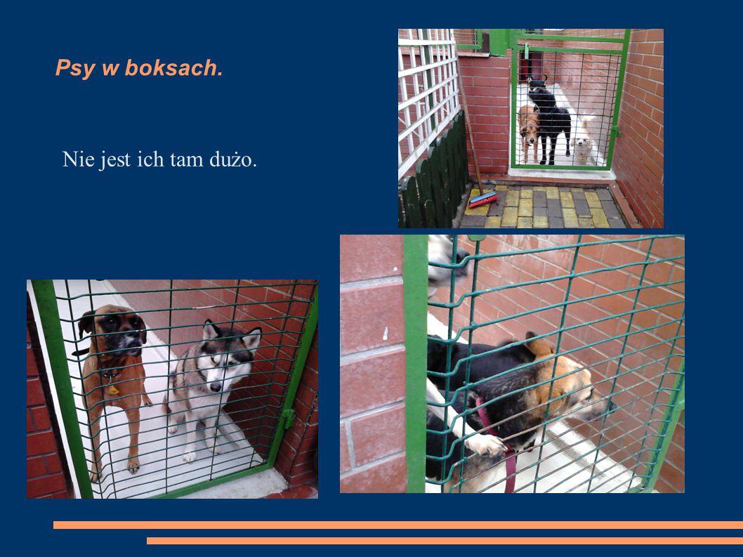 Psy w boksach. Nie jest ich tam dużo.