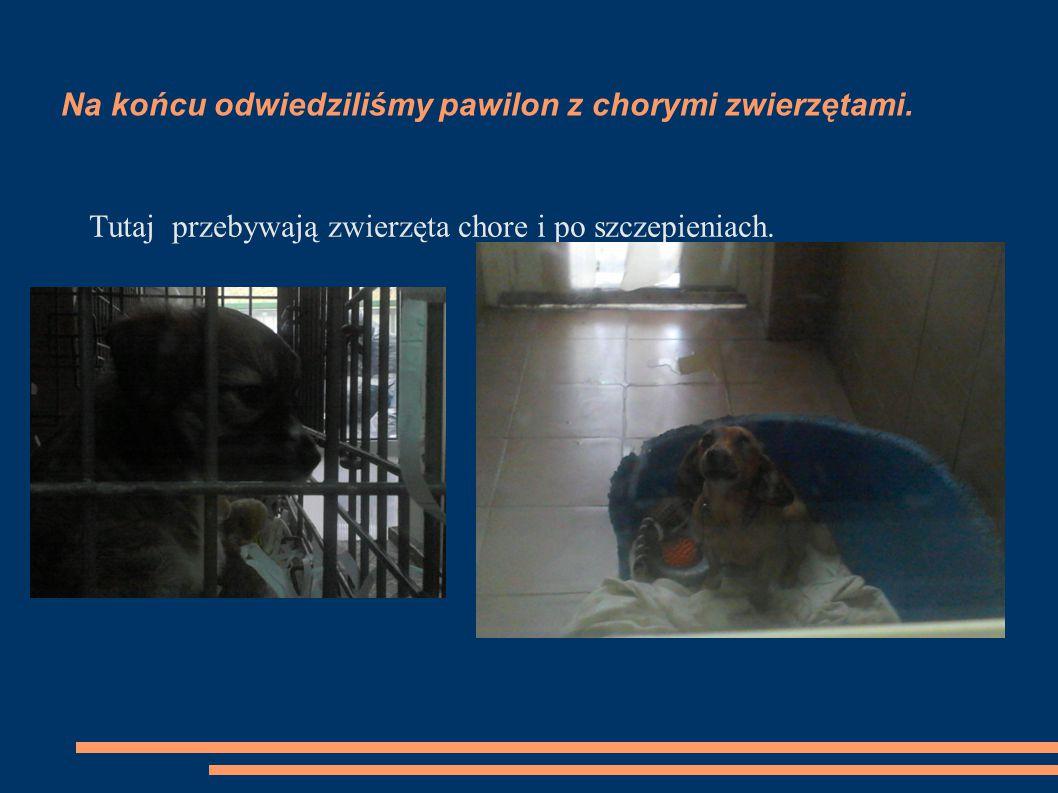 Na końcu odwiedziliśmy pawilon z chorymi zwierzętami. Tutaj przebywają zwierzęta chore i po szczepieniach.