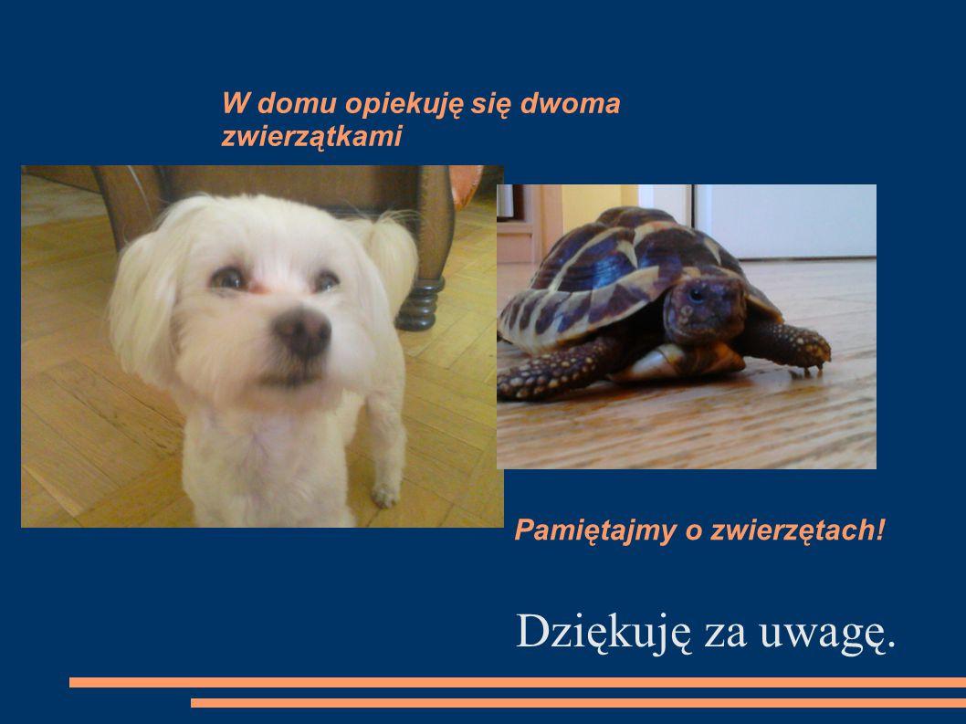 W domu opiekuję się dwoma zwierzątkami Dziękuję za uwagę. Pamiętajmy o zwierzętach!