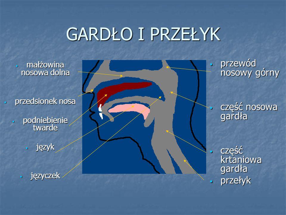 GARDŁO I PRZEŁYK małżowina nosowa dolna małżowina nosowa dolna przedsionek nosa przedsionek nosa podniebienie twarde podniebienie twarde język język j