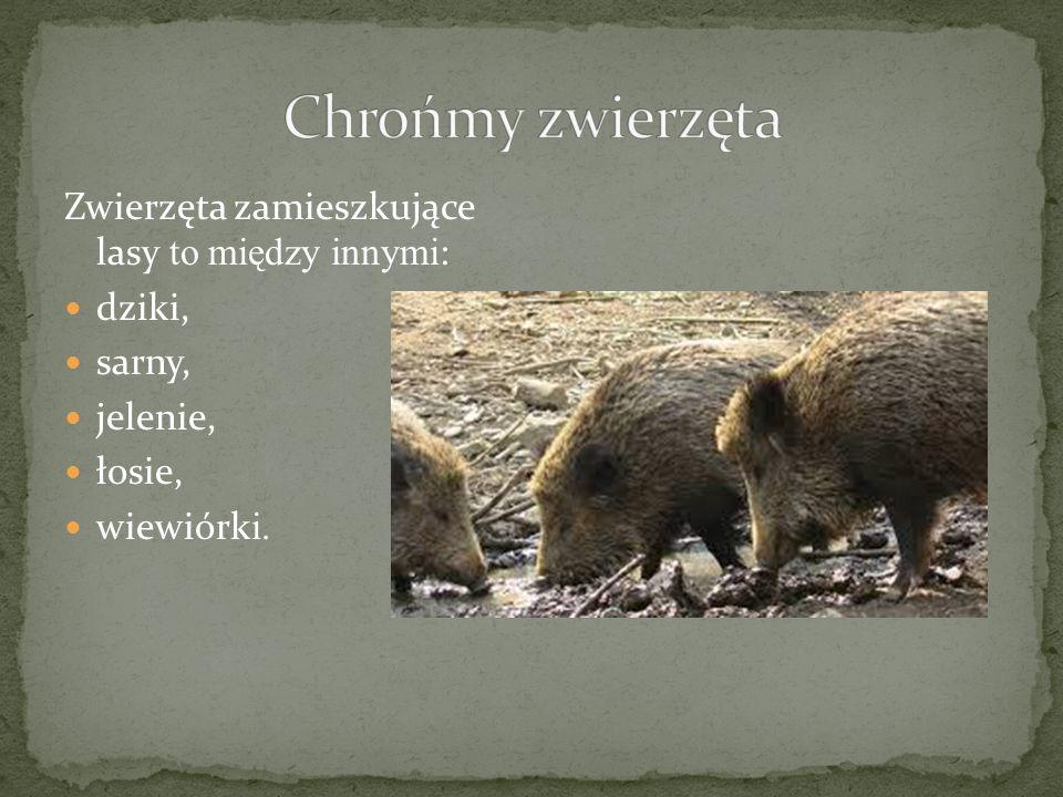Zwierzęta zamieszkujące lasy to między innymi : dziki, sarny, jelenie, łosie, wiewiórk i.