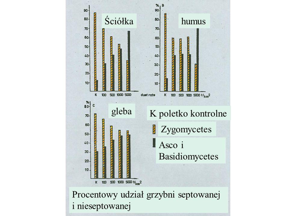 Ściółkahumus gleba K poletko kontrolne Zygomycetes Asco i Basidiomycetes Procentowy udział grzybni septowanej i nieseptowanej