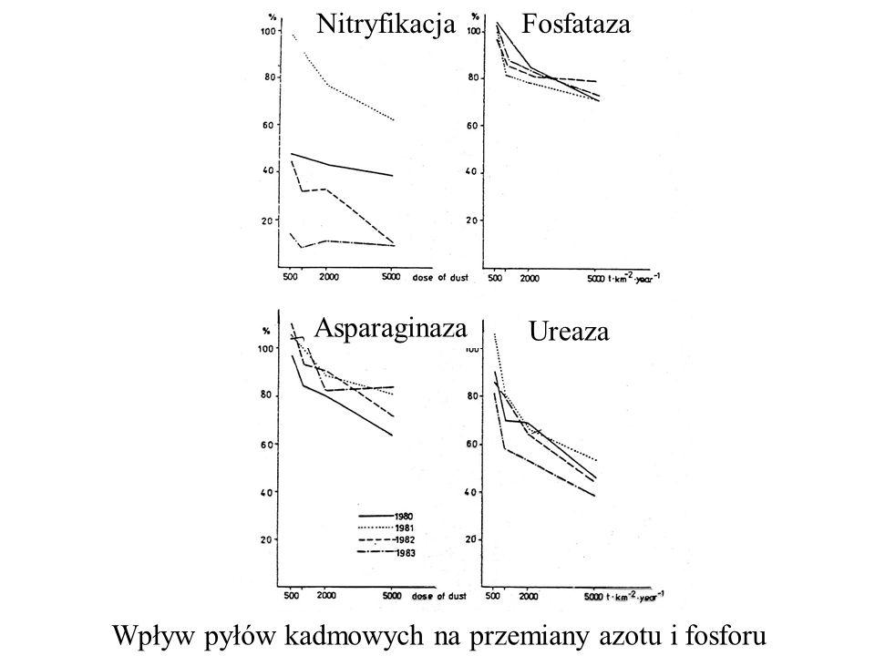 NitryfikacjaFosfataza Asparaginaza Ureaza Wpływ pyłów kadmowych na przemiany azotu i fosforu