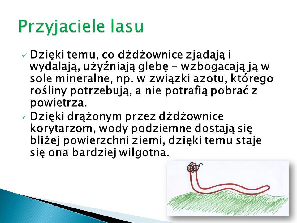 Dzięki temu, co dżdżownice zjadają i wydalają, użyźniają glebę - wzbogacają ją w sole mineralne, np. w związki azotu, którego rośliny potrzebują, a ni