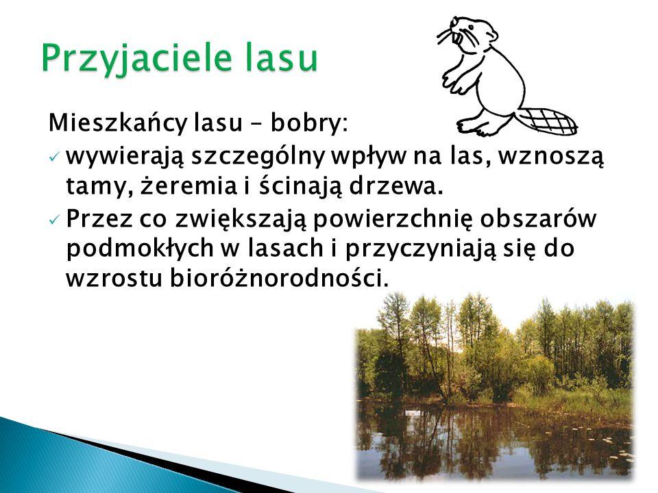 Mieszkańcy lasu – bobry: wywierają szczególny wpływ na las, wznoszą tamy, żeremia i ścinają drzewa. Przez co zwiększają powierzchnię obszarów podmokły