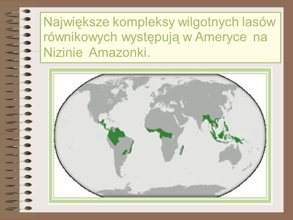 Warunki klimatyczne sprzyjają rozwojowi roślinności Wilgotne lasy równikowe rozwinęły się w pobliżu równika, gdzie warunki klimatyczne są bardzo korzystne do rozwoju roślin.