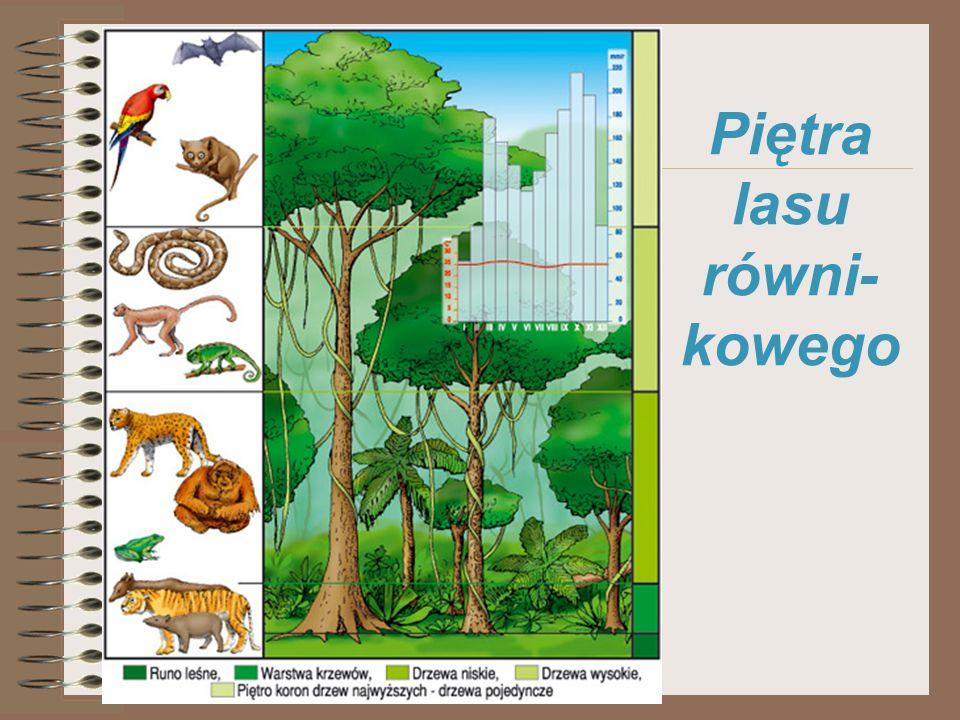 1.Zwierzęta które jedzą banany 2. Duże koty 3. Rodzaj papug 4.