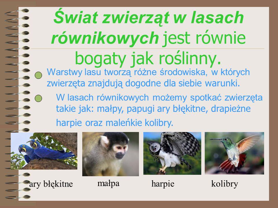 http://nook-of-animals.blog.onet.pl http://biologiawliceum.blogspot.com/2012/01/choroba-kakaowcow.html https://pl.wikipedia.org/wiki/Wilgotny_las_r%C3%B3wnikowy http://www.geobelfer.republika.pl http://www.geo.norwid24.waw.pl/index.php?strona=_opracowania/geo_ 320lesn Informacje pochodzą ze strony: Autor: Violetta W.