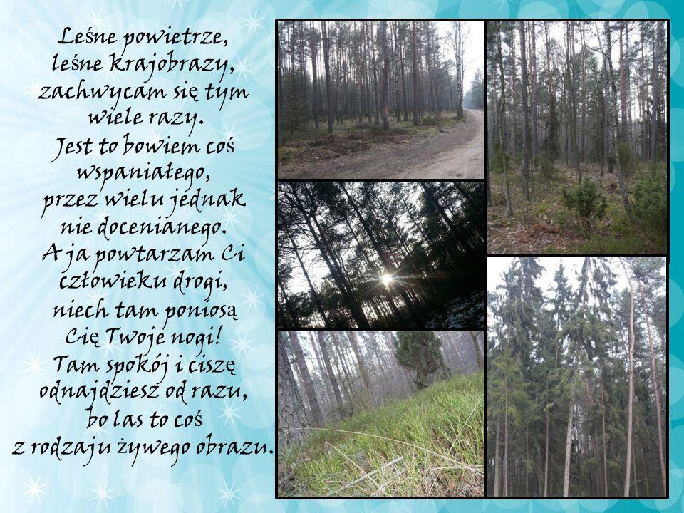 Lasy to jedno z największych dóbr na Ziemi.