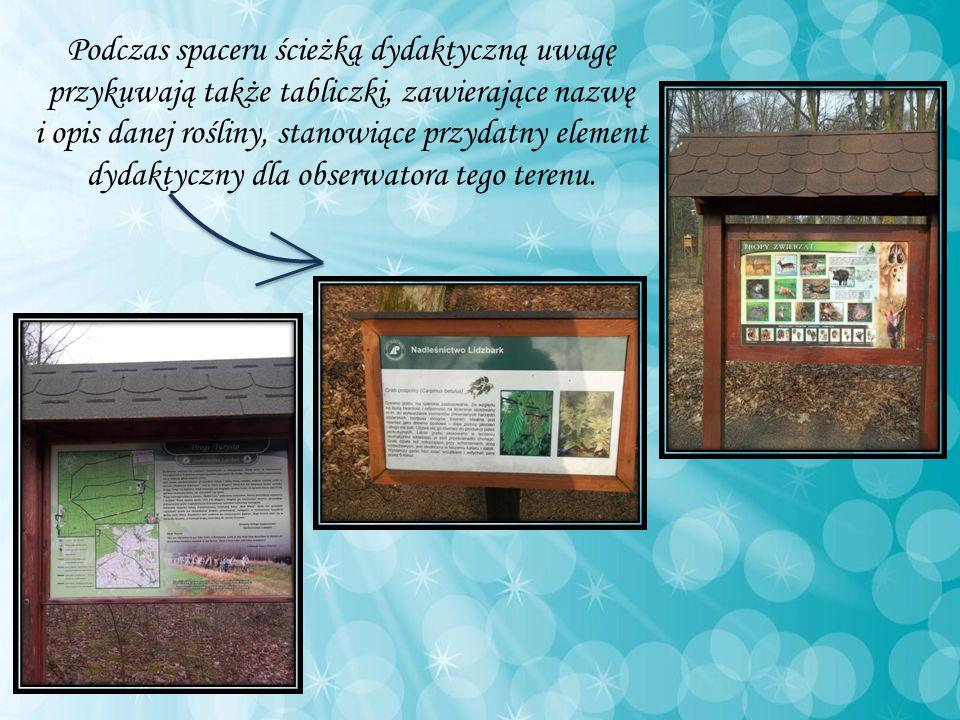 Podczas spaceru ścieżką dydaktyczną uwagę przykuwają także tabliczki, zawierające nazwę i opis danej rośliny, stanowiące przydatny element dydaktyczny dla obserwatora tego terenu.