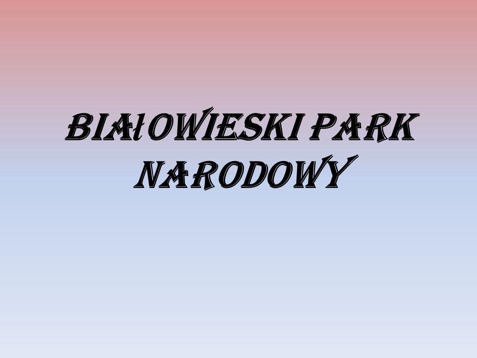 Bia ł owieski Park Narodowy