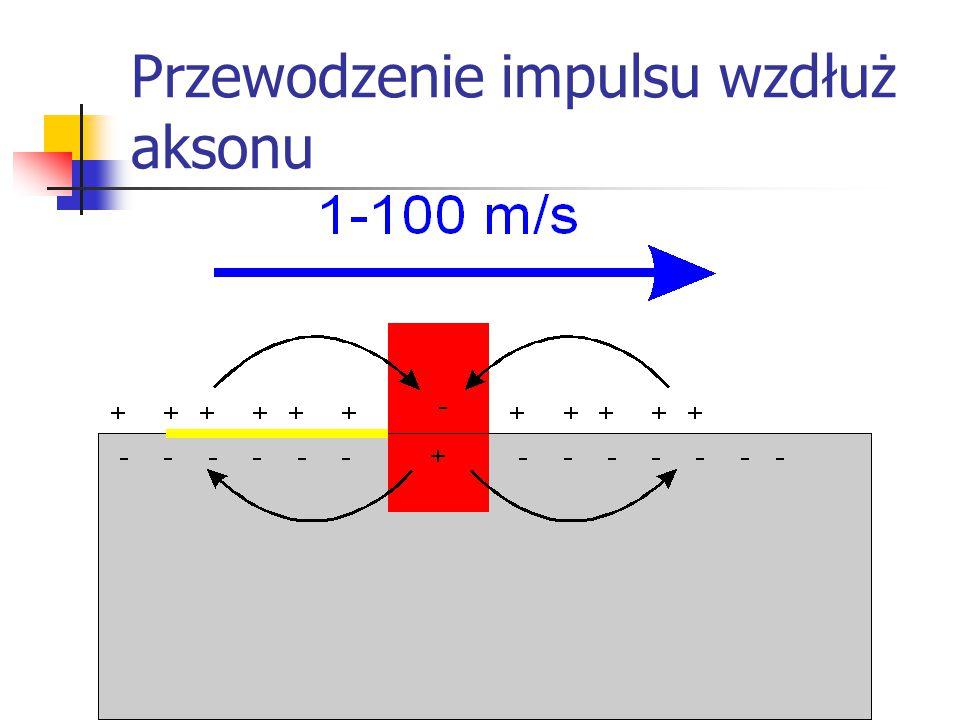 Przewodzenie impulsu wzdłuż aksonu