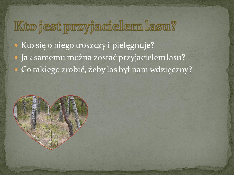 Kto się o niego troszczy i pielęgnuje? Jak samemu można zostać przyjacielem lasu? Co takiego zrobić, żeby las był nam wdzięczny?