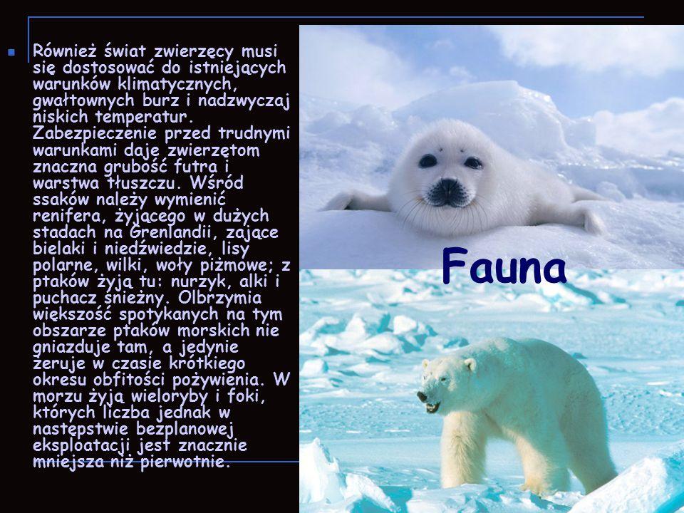 Również świat zwierzęcy musi się dostosować do istniejących warunków klimatycznych, gwałtownych burz i nadzwyczaj niskich temperatur. Zabezpieczenie p