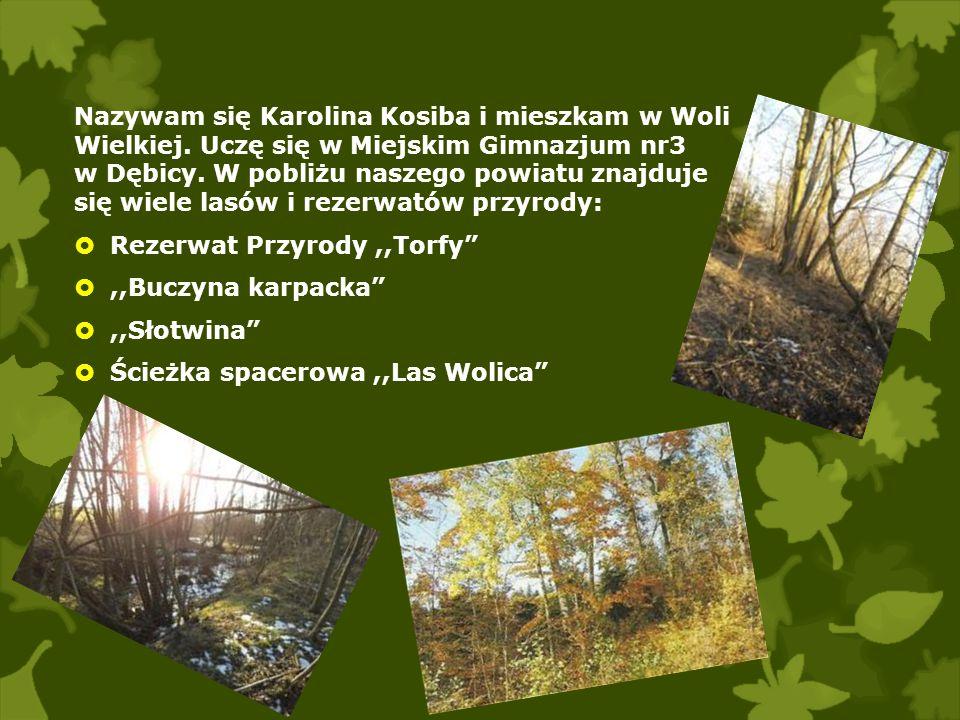 Nazywam się Karolina Kosiba i mieszkam w Woli Wielkiej. Uczę się w Miejskim Gimnazjum nr3 w Dębicy. W pobliżu naszego powiatu znajduje się wiele lasów