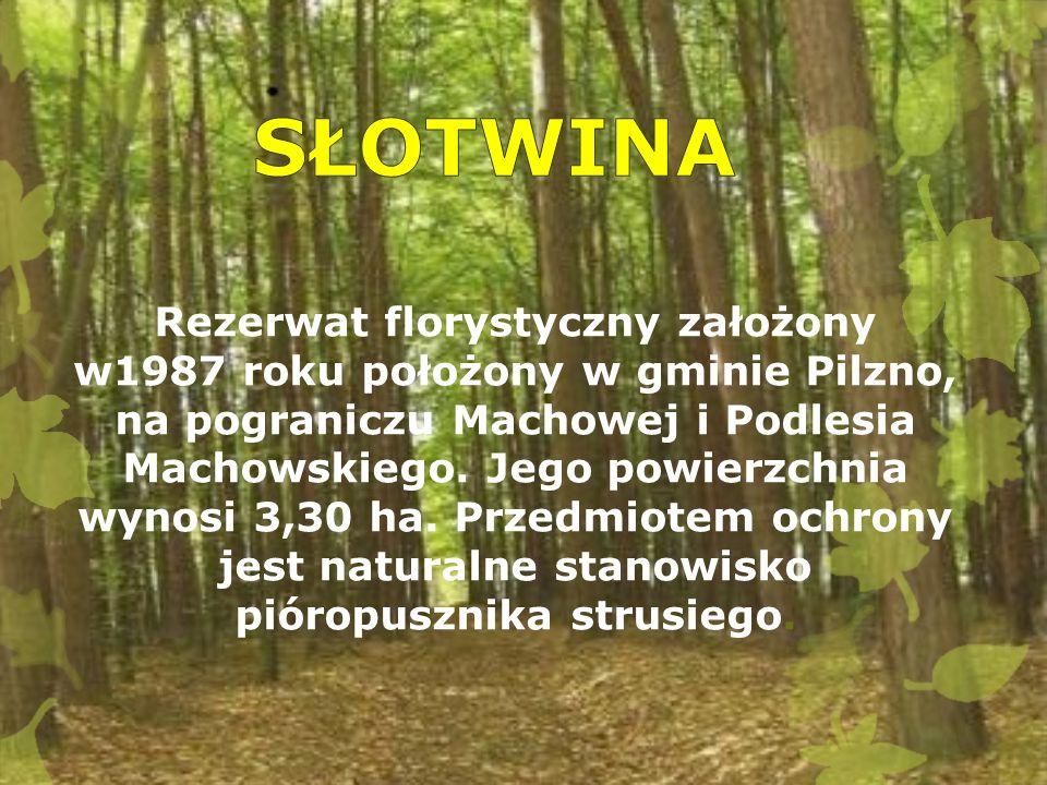 Rezerwat florystyczny założony w1987 roku położony w gminie Pilzno, na pograniczu Machowej i Podlesia Machowskiego. Jego powierzchnia wynosi 3,30 ha.