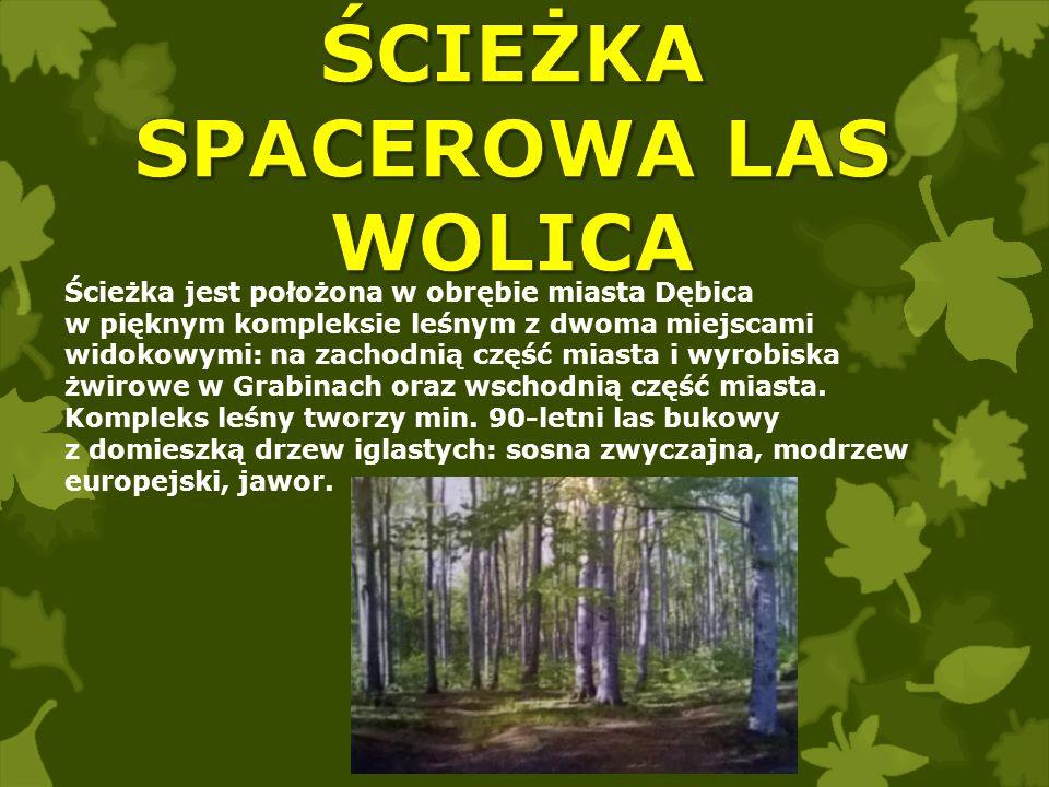 Ścieżka jest położona w obrębie miasta Dębica w pięknym kompleksie leśnym z dwoma miejscami widokowymi: na zachodnią część miasta i wyrobiska żwirowe