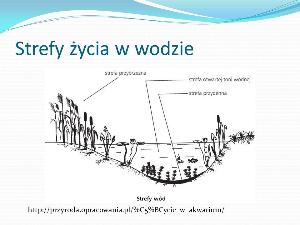 Strefy życia w wodzie http://przyroda.opracowania.pl/%C5%BCycie_w_akwarium/