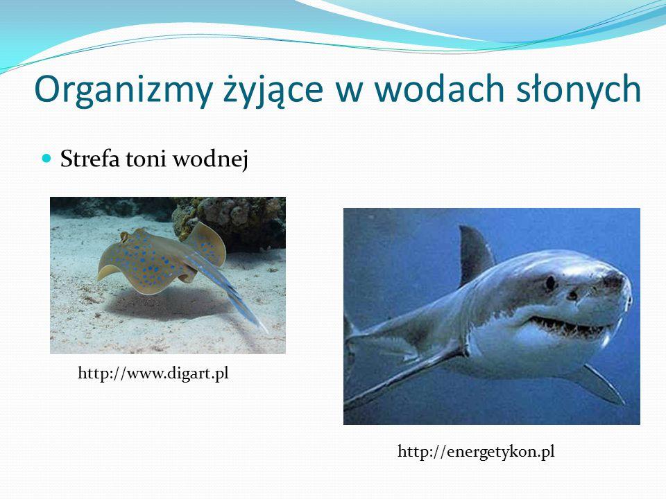 Organizmy żyjące w wodach słonych Strefa toni wodnej http://www.digart.pl http://energetykon.pl