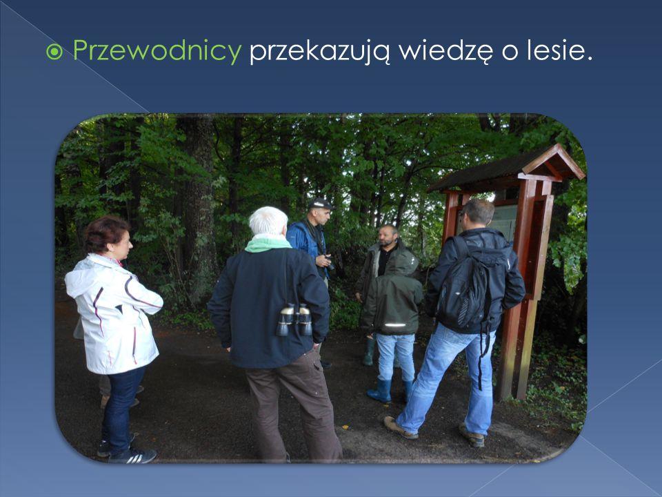  Polscy uczeni dzięki, którym odnowiono w Puszczy Białowieskiej populację żubra. Żubry Białowiejskie tworzą stada również w innych krajach Europy.