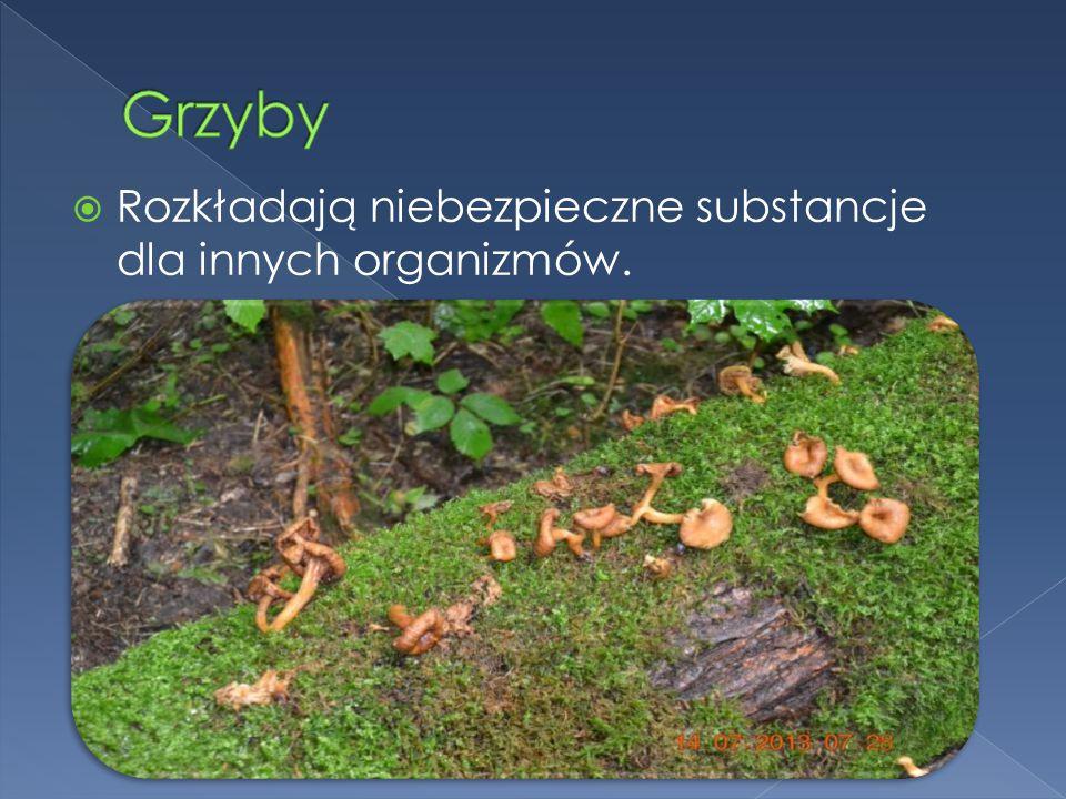  Dżdżownice użyźniają glebę.