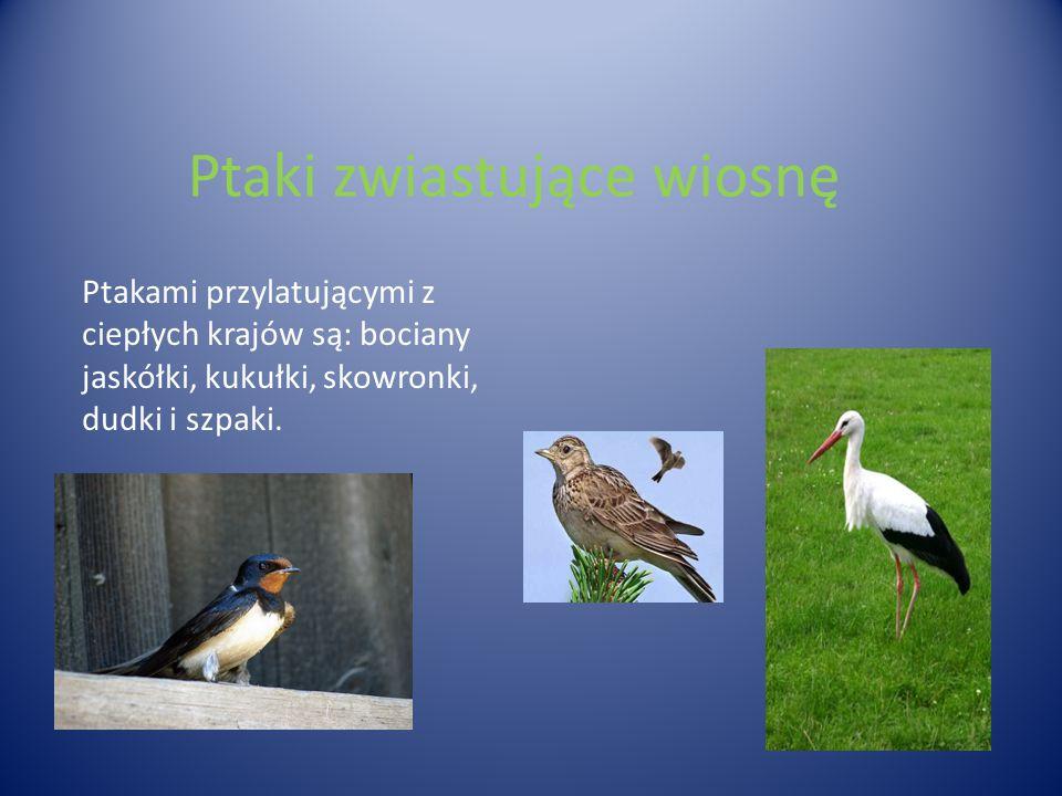 Ptaki zwiastujące wiosnę Ptakami przylatującymi z ciepłych krajów są: bociany jaskółki, kukułki, skowronki, dudki i szpaki.