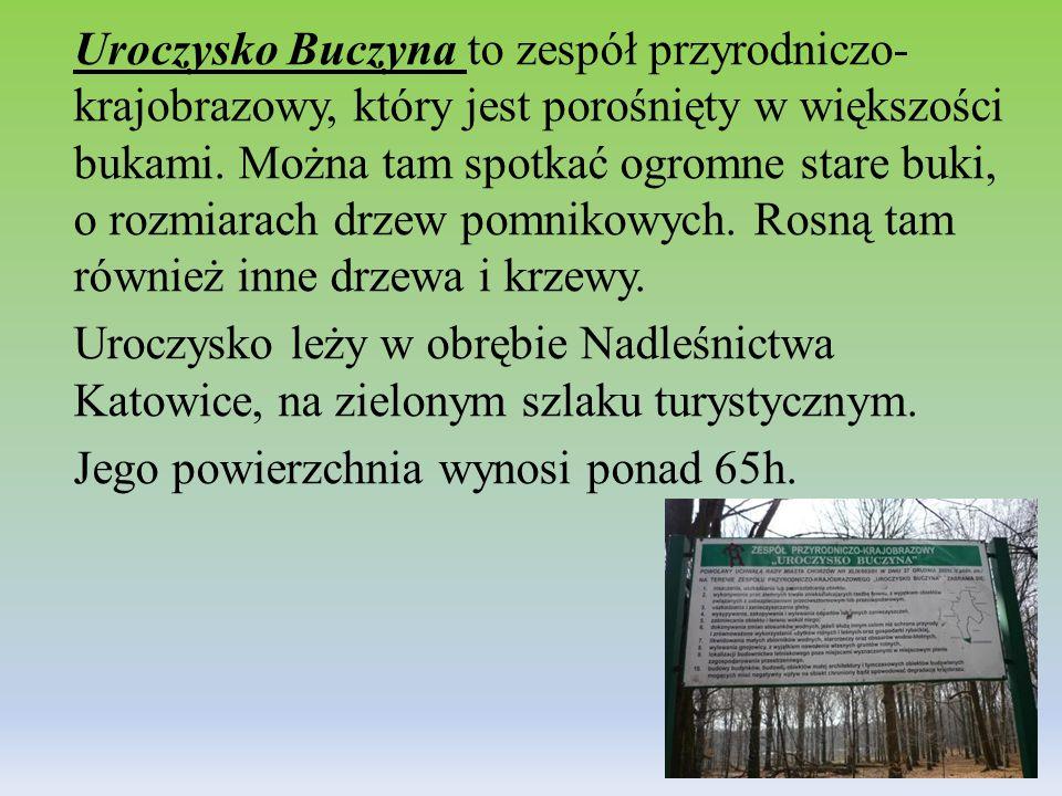 Uroczysko Buczyna to zespół przyrodniczo- krajobrazowy, który jest porośnięty w większości bukami.