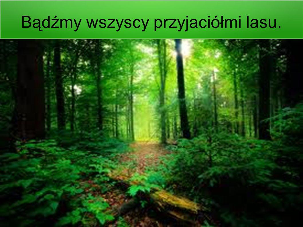 Bądźmy wszyscy przyjaciółmi lasu.