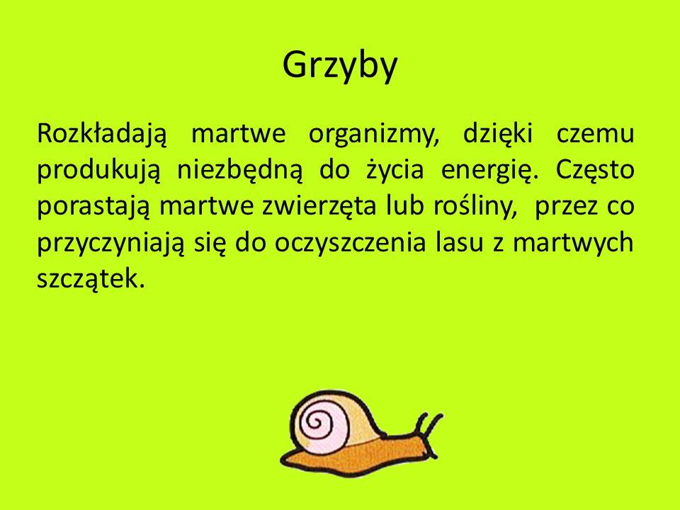 Grzyby Rozkładają martwe organizmy, dzięki czemu produkują niezbędną do życia energię. Często porastają martwe zwierzęta lub rośliny, przez co przyczy
