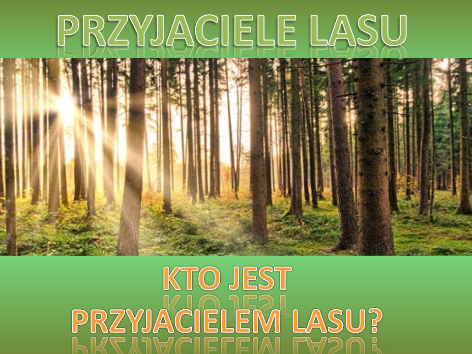 Leśniczy chroni las i stara się, by przetrwał jak najdłużej.