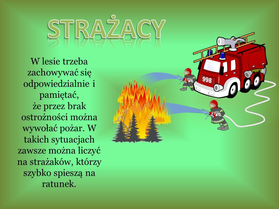 W lesie trzeba zachowywać się odpowiedzialnie i pamiętać, że przez brak ostrożności można wywołać pożar.