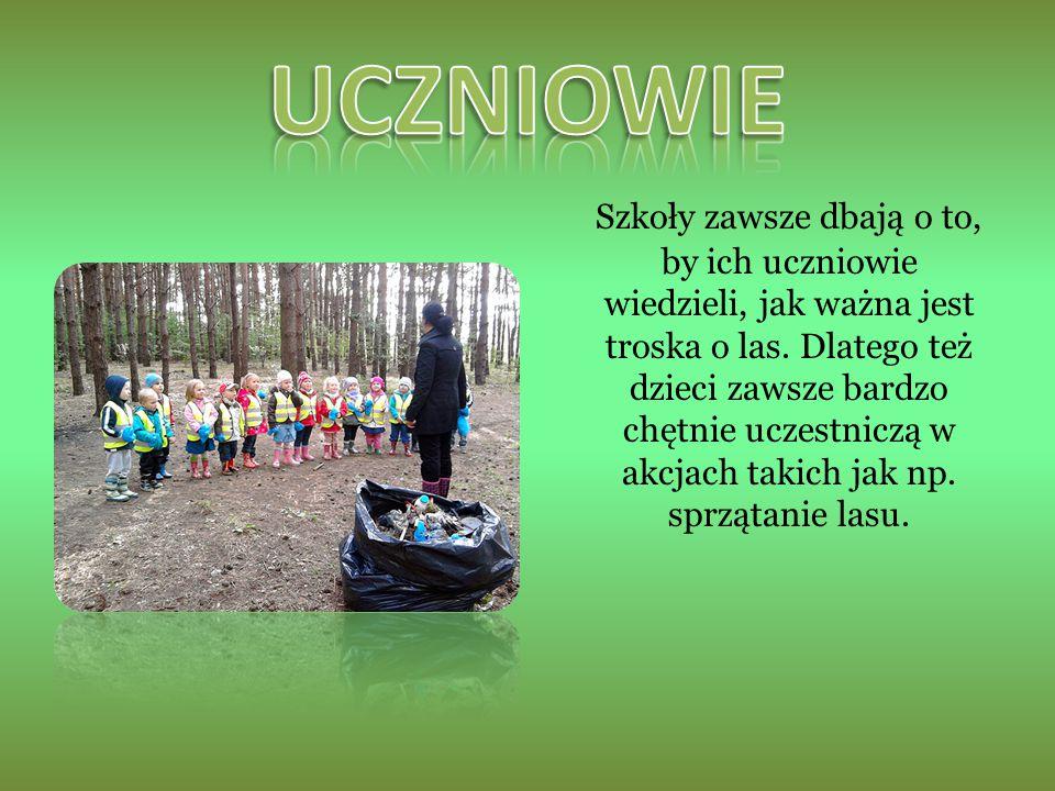 Szkoły zawsze dbają o to, by ich uczniowie wiedzieli, jak ważna jest troska o las.