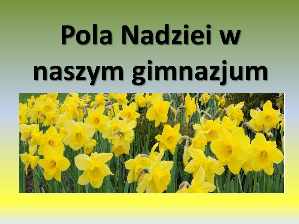 Pola Nadziei w naszym gimnazjum