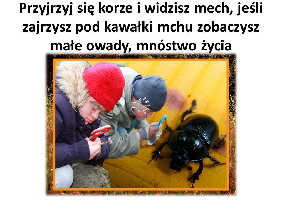 Przyjrzyj się korze i widzisz mech, jeśli zajrzysz pod kawałki mchu zobaczysz małe owady, mnóstwo życia