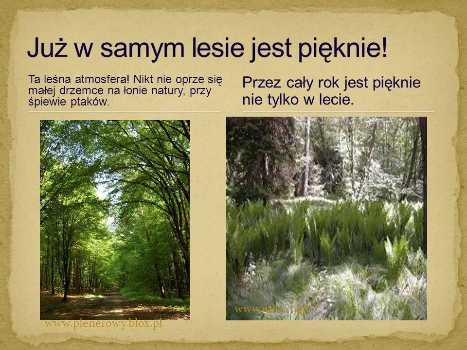 Ta leśna atmosfera! Nikt nie oprze się małej drzemce na łonie natury, przy śpiewie ptaków. Przez cały rok jest pięknie nie tylko w lecie. www.plenerow