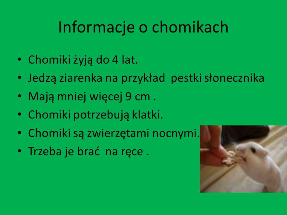 Informacje o chomikach Chomiki żyją do 4 lat. Jedzą ziarenka na przykład pestki słonecznika Mają mniej więcej 9 cm. Chomiki potrzebują klatki. Chomiki