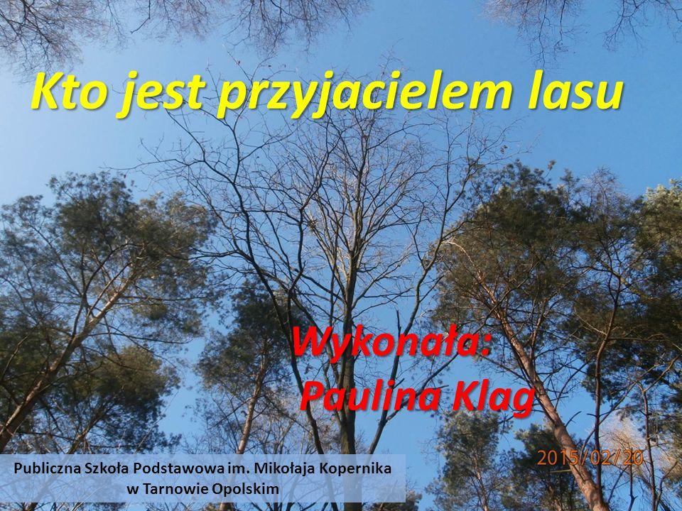 Kto jest przyjacielem lasu Wykonała: Paulina Klag Paulina Klag Publiczna Szkoła Podstawowa im.