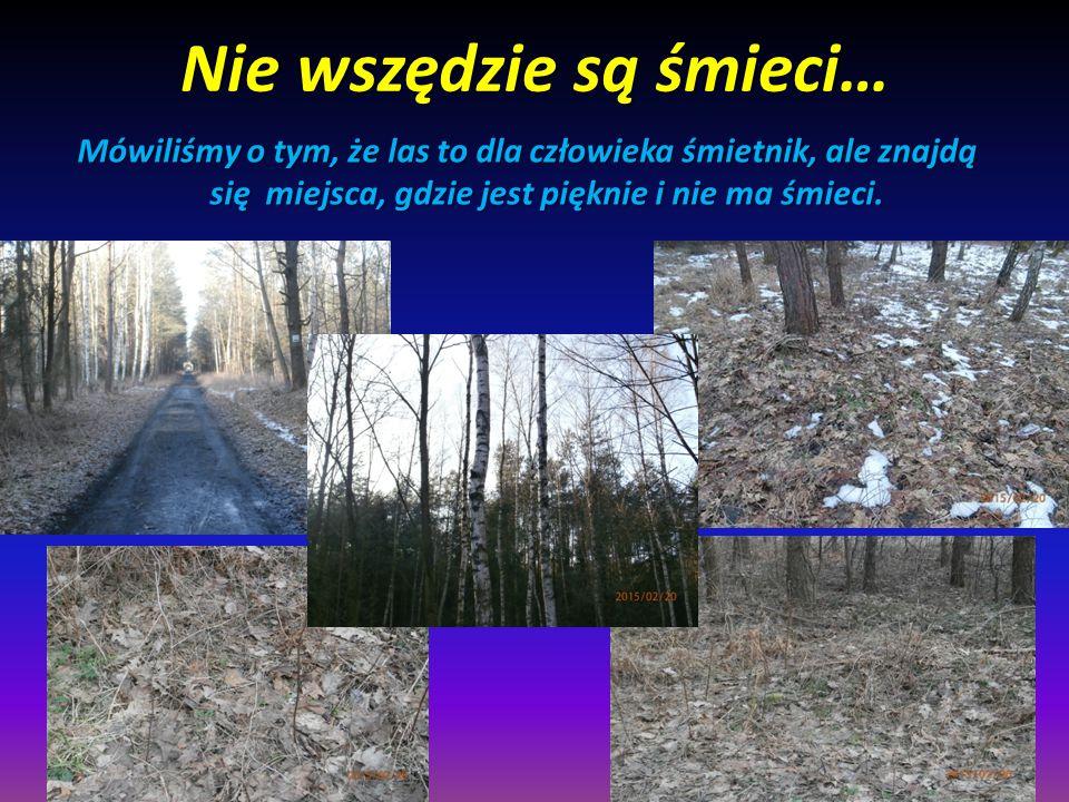 Śmieci, śmieci, śmieci… Kiedyś las był o wiele ważniejszy dla ludzi.