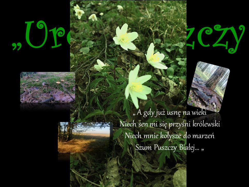 """""""Nie próbuj mi wmawiać, że natura nie jest cudem. Nie opowiadaj mi, że świat nie jest basnią…"""