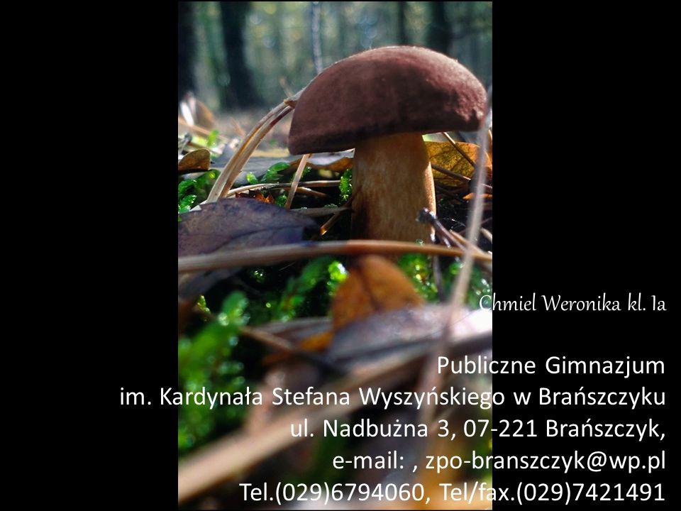 Chmiel Weronika kl. Ia Publiczne Gimnazjum im. Kardynała Stefana Wyszyńskiego w Brańszczyku ul. Nadbużna 3, 07-221 Brańszczyk, e-mail:, zpo-branszczyk
