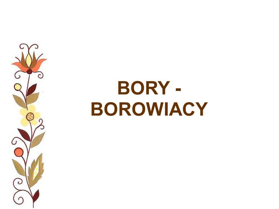 BORY - BOROWIACY